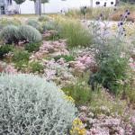 Foto Mischpflanzungen im urbanen Grün